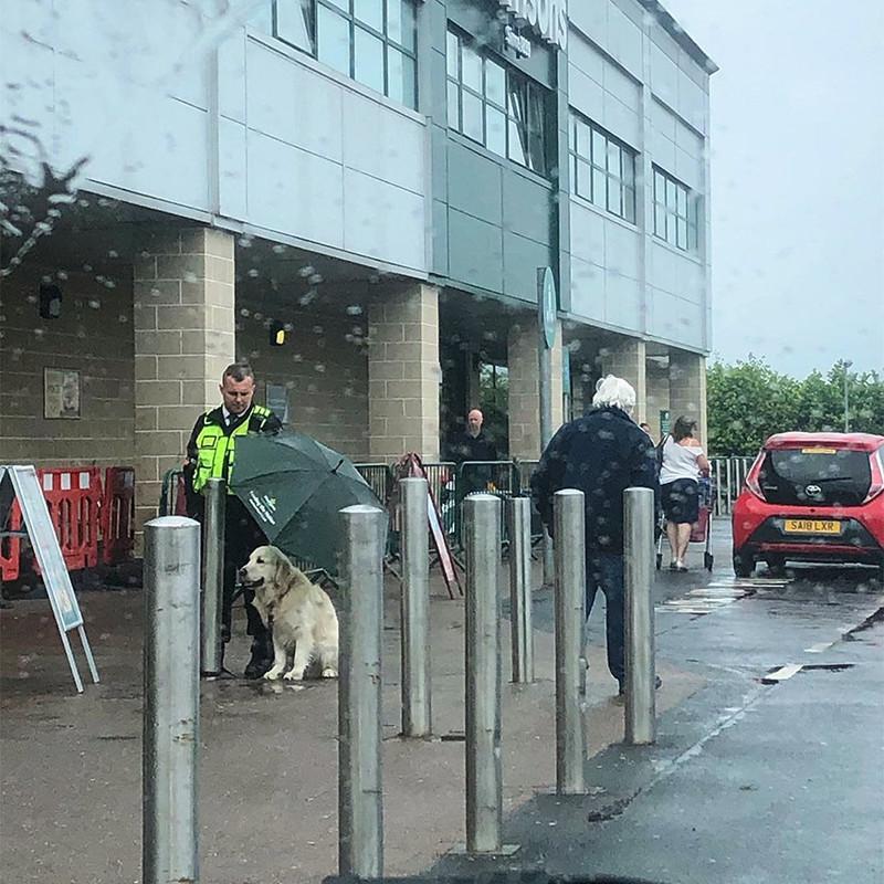 Chú chó kiên quyết đứng dưới trời mưa mặc dùđược nhân viên an ninh trung tâm thương mại tháo xích cho.